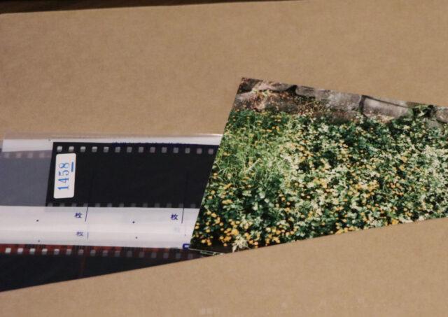 フィルムの現像